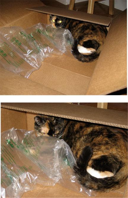 Wheezie box