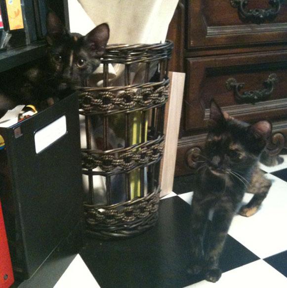 Studio kitties blog