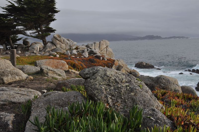 California 2012343