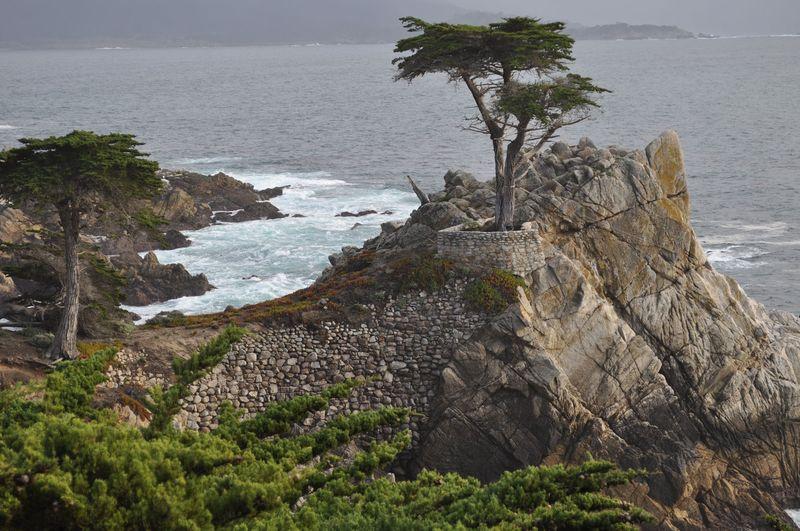 California 2012323