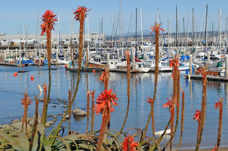 California 2012386